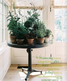 The Newlywed Diaries: Day 864's idea for indoor plants