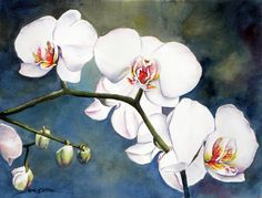 Sue Lynn Cotton WATERCOLOR