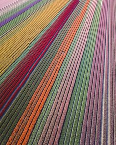 """Location: Noordoostpolder, Netherlands""""The blooming tulip fields make every spring special in the Netherlands. Seeing them from above makes it even more special! Best Places To Propose, Places To Go, Tulip Fields Netherlands, The Netherlands, Flower Photos, Natural Wonders, Land Scape, Wonders Of The World, Amsterdam"""