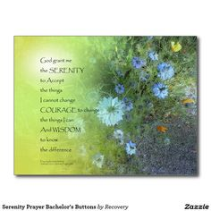 Serenity Prayer Bachelor's Buttons Postcard