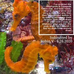 Coral Frags, Coral Tank, Live Coral, Saltwater Tank, Saltwater Aquarium, Aqua Culture, Reef Aquarium, Hiding Places, Corals