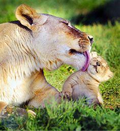 frases para la vida   En esta fecha, se celebra la vida animal en cualquiera de sus formas.