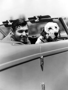Clark Gable & Dog, a Spaniel.