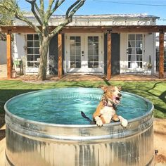 A relieved pup escapes the sun by taking a dip at Reset West, a Tempe,...