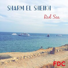 Always welcome! We will show you the wonderful world of the Red Sea! #firstdiveclub #diving #redsea #scuba #scubadiving #sharmelsheikh #godive by fdc_red_sea_