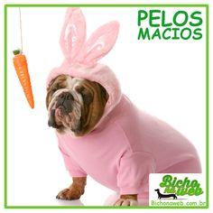 Seu Pet não precisa ser um coelhinho para ter pelos mais macios, acesse nossa loja Bichonaweb.com.br e conheça as rasqueadeiras com corte, muito mais maciez e menor queda de pelos para seu Pet.