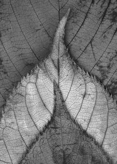 Shapes of leaves black and white photography