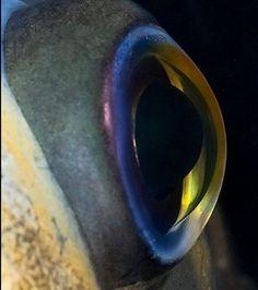 Ce macro-portrait nous montre un oeil de poisson En savoir plus: http://www.gentside.com/insolite/ce-macro-portrait-nous-montre-un-oeil-de-poisson_pic119763.html Copyright © Gentside