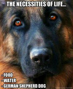 The necessities of life...food, water, GSD <3