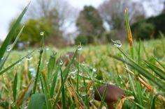 champignons bretons
