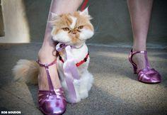 Super cute cat, pink shoes
