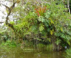 Belize River Fauna