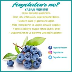 Yaban mersini faydaları Source by neslesesikaya Fast Weight Loss, Healthy Weight Loss, Health Tips, Health Care, Detox Recipes, Herbalife, Beauty Secrets, Healthy Life, Fruit Garden