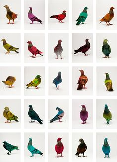 Some Pigeons Are More Equal Than Others; dyed pigeons by Berlin-based artists Julius von Bismarck & Julian Charriere