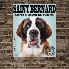 a9f4ccf8db8d 139 Best Saint Bernards images