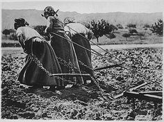 Women in France cultivating fields during World War I--horses were in the battlefield