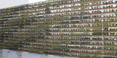 小松精練[グリーンビズ] 壁面緑化材 greenbiz Louver(グリーンビスL):特徴