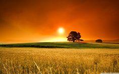 Summer Sunset Wallpaper Full HD [2560x1600] - Free wallpaper full ...