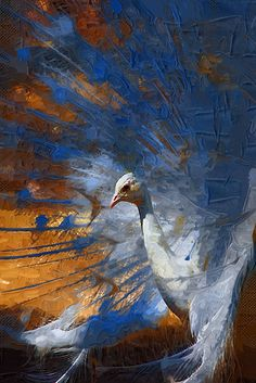 White Peacock painting by Allan Howell, via Flickr