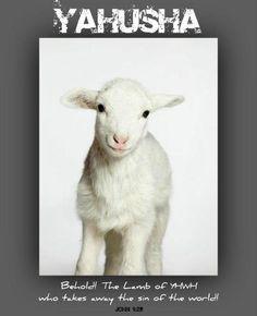 Yahusha, Lamb of God