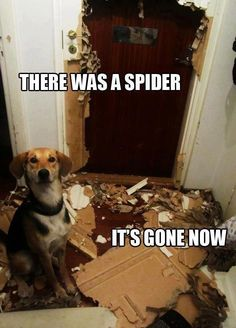 It was a really big spider... I swear! No, not Spiderman...spider... giant one!