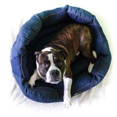 Tento štýlový pelech Beco Donut Bed zaručí tvojmu psíkovi maximálne pohodlie. Je vyrobený z bavlny, konope a recyklovaných plastových fliaš, vďaka čomu je šetrný k životnému prostrediu. Dvojité prešitie a hustá penová podložka mu dodáva pevnosť a odolnosť. Ak sa zašpiní, kľudne ho môžeš oprať v práčke. Keďže sú naše pelechy vyrobené z prírodných vlákien. Beco Donut Beds sú hypoalergénne, antibakteriálne a odolné voči zápachom :) Donuts, Boston Terrier, Blue, Animals, Frost Donuts, Boston Terriers, Animales, Beignets, Animaux