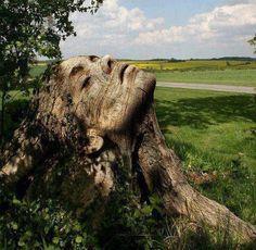 Rostro de Mujer Tallado en tronco de arbol