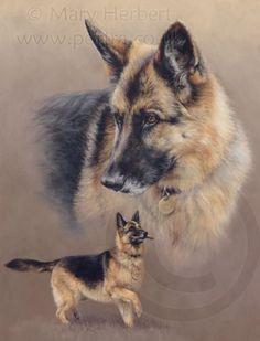 German Shepherd dog GSD portrait by Mary Herbert