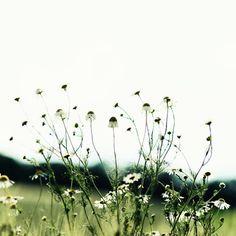 ✽   meadow