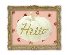 White hello pumpkin with vintage rose background