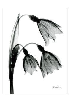 Snowdrop. My birth flower going around my Aquarius symbol tattoo on my cafe muscle