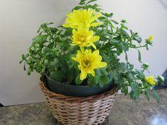 InScribe Writers Online: The Chrysanthemum Knows - Shirley S. Tye