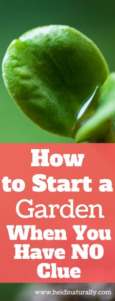 Follow these simple tips to know how to start a garden successfully. Learn the most important steps needed to start, grow and maintain a healthy garden. via Heidi Naturally | Helping Moms Live a Great Life