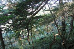 花山歩道の森。