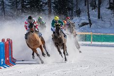 Discover the best source for free images and videos. Free for commercial use ✓ No attribution required ✓ Courses Hippiques, Horse Racing, Free Images, Camel, Horses, Black And White, Animals, Passion, Paris