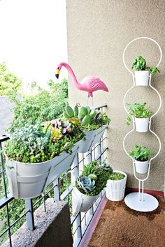 Balcony Succulent Garden Planters -  window box style planters from IKEA