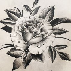 Rose Drawing – 75 Picture Ideas – Drawing Ideas and Tutorials Rose Drawing Tattoo, Tattoo Sketches, Tattoo Drawings, Drawing Sketches, Drawing Art, Drawing Ideas, Rose Tattoos, Flower Tattoos, Body Art Tattoos