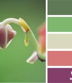 emerging hues