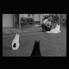 https://flic.kr/p/v2TwBh | Mayu and Kuro June 2015  #cat #smallcats #dog #blackandwhitephotography