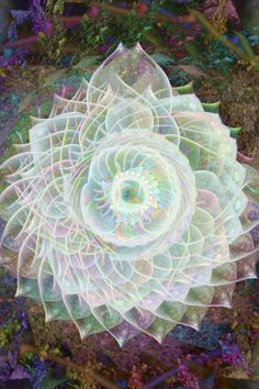 """""""I understand not the explicit mathematics of our spirit, only that we are pure as the light we travel within and our love, given freely, will save us. Geometry Art, Sacred Geometry, Chakras, Chakra Art, Chakra Healing, Visionary Art, Fractal Art, Fractal Images, Sacred Art"""