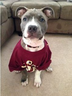 What a cute fan! #HTTR