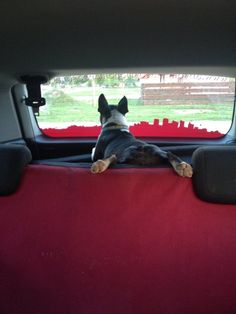 Antony loves traveling Boston Terrier Love, Boston Terriers, American Dog, Holiday Fun, Traveling, Puppies, Holidays, Pets, Friends