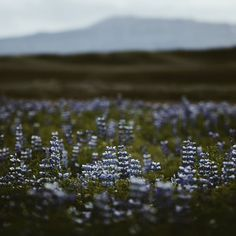 "grace–upon–grace: "" Iceland, Marina Weishaupt """