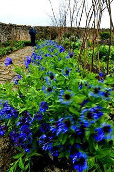 Gertrude Jekyll garden, Holy Island, England