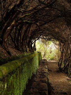 witchedways:  feral-ethereal:  digitalexrth:    Tree tunnel    Dan Micklewright  bewitched forest
