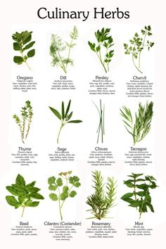 Culinary Herb Poster ~ Identify and Uses!