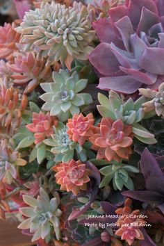 Colorful succulent r