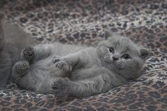 Hi there! I'm so cute, big claws. by Roman R., via Flickr