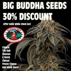 Gotta be fast. there almost out. some great deals on the Big Buddha Seeds collection http://seedjourney.com/feminized/big-buddha-seeds.html #420 #herb #weed #marijuana #cannabis #maryjane #pot