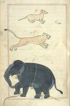 """Kitab Aja'ib al-makhluqat wa Gharaib al-Mawjudat, literally """"The Wonders of Creation,"""" compiled in the middle 1200s in what is now Iran or Iraq. The vibrantly illustrated work is considered one of the most important natural history texts of the medieval Islamic world. - Things that Quicken the Heart: Marvels of Creatures and Strange Things Existing"""